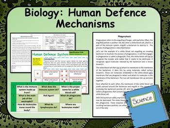 Human Immune System Lesson