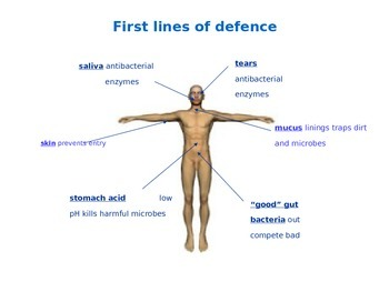 Human Immune System Quick Review - Presentation/Handout