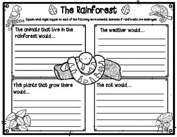 Human Impact on Rainforests Graphic Organizer