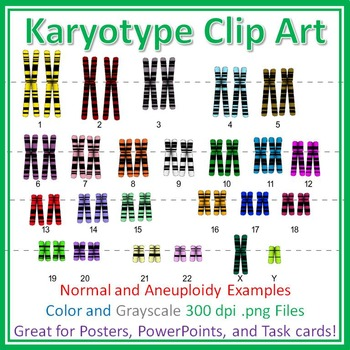 Human Karyotype Chromosome Clip Art: Diagrams for Posters, Quizzes, Task Cards