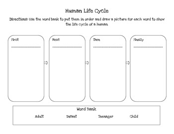 Human life cycle by mcmanus firsties teachers pay teachers human life cycle ibookread ePUb