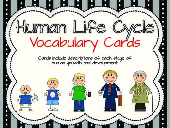 Human Life Cycle Activities Packet