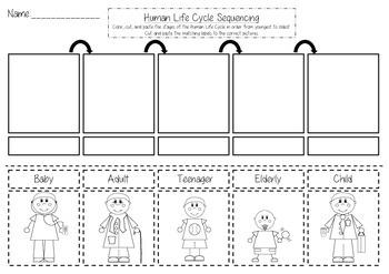 Human Life Cycle Worksheet - Delibertad