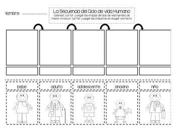 Human Life Cycle Sequencing *Spanish Version* by Completely Kindergarten
