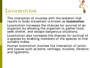 Human Locomotion - Muscles Bones PowerPoint Presentation Lesson Plan