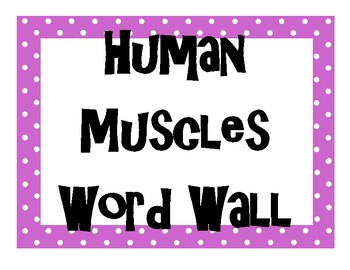 Human Muscles (Muscular System) Word Wall High School Anatomy