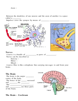 Human Nervous and Endocrine System Notes Outline Lesson Plan