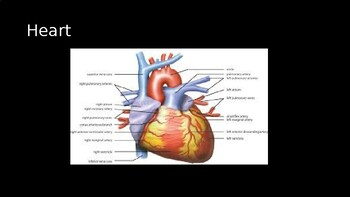 Human Organ Review