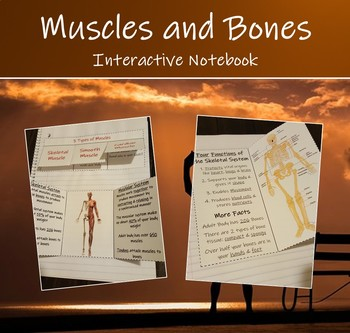 Interactive Science Notebook - Human Organ Systems (Muscular & Skeletal Systems)