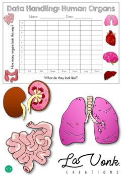 Human Organs - Bar Chart - Data Handling