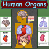 Human Organs Bulletin