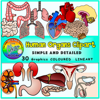 Human Organs Clipart