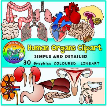Human Organs Clipart [BUNDLE]