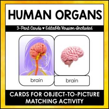 Human Organs - Safari Toob 3 Part Cards - Editable