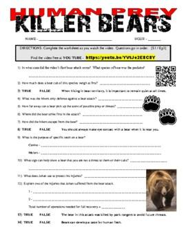 Human Prey : Killer Bears (free animal video / question sheet)