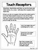Human Receptors and Five Sense