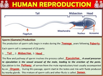 Human Reproduction: Animated PowerPoint