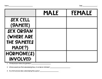 Human Reproduction Graphic Organizer
