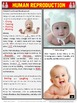 Human Reproduction: Guided Note Packet