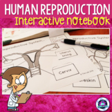 Human Reproduction Interactive Notebook Activites