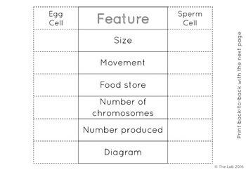 Human Reproduction Interactive Notebook Activites