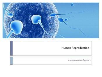 Human Reproduction PowerPoint