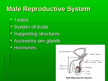 Human Reproduction Powerpoint1