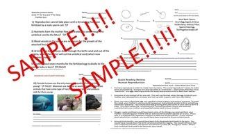 Human Reproduction Quiz Biology/Health SPED/ESL/Autism/ID