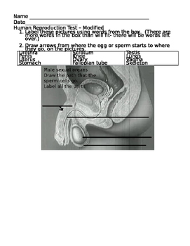 Human Reproduction Test or Worksheet Modified - Editable