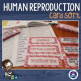 Human Reproduction Vocabulary Card Sort