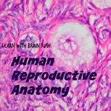Human Reproductive Anatomy: Learn With Brain Rush Webquest
