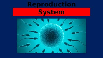 Human Reproductive System Power Point Presentation