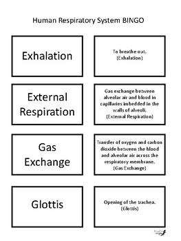 Human Respiratory System BINGO!