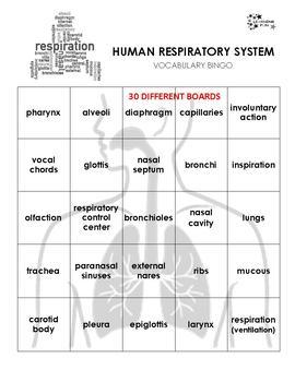 Human Respiratory System Bingo