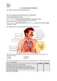Human Respiratory System - Worksheet
