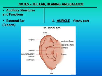 Human Senses - The Ear Notes Powerpoint Presentation