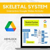 Human Skeletal System - Bone Identification Activity in Sl