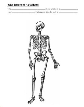 Human Skeletal System PowerPoint with Cloze Notes and Diagram