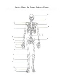 Human Skeleton Bones Assessment