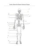 Human Skeleton Bones Assessment