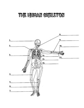Human Skeleton Diagram to Label (middle school)