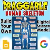 Human Skeleton - Digital Draggable Science Model