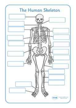 Human Skeleton Labelling Sheets