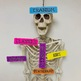Human Skeleton Major Bones Labels