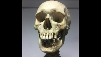 Human Skeleton. Photographic Slideshow