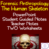 Human Skeleton: PowerPoint, illustrated Student Guided Notes, Worksheet
