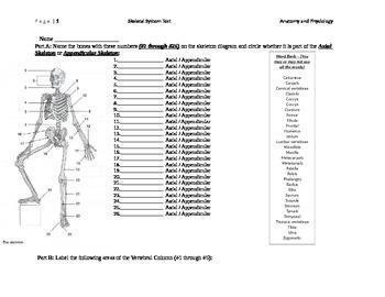 Human Skeleton Test