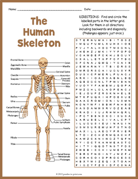 Human Skeleton Activity - Word Search FUN by Puzzles to ...
