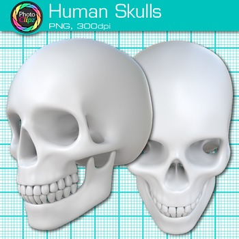 Human Skull Clip Art {Great for Learning Body Systems, Science Resources}
