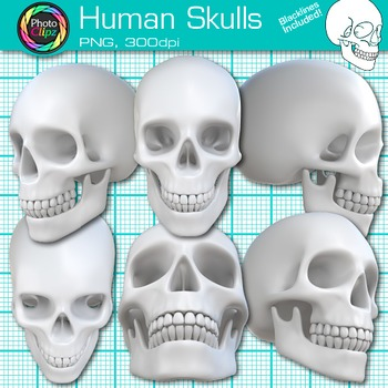 Human Skull Clip Art {Great for Learning Body Systems, Sci